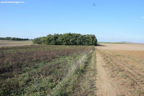 Eladó 4,2 hektár földterület Sümeg mellett