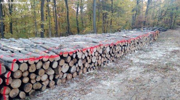 Erdészeti termelésből tölgy akác