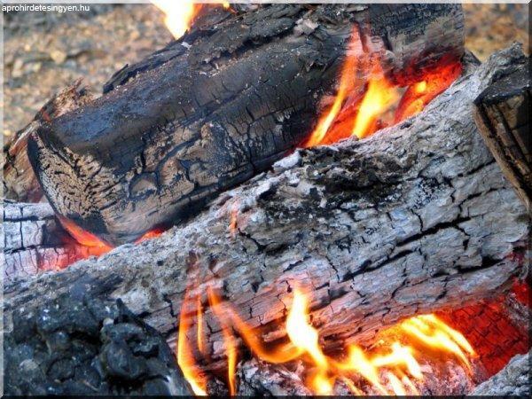 Tűzifa eladó!